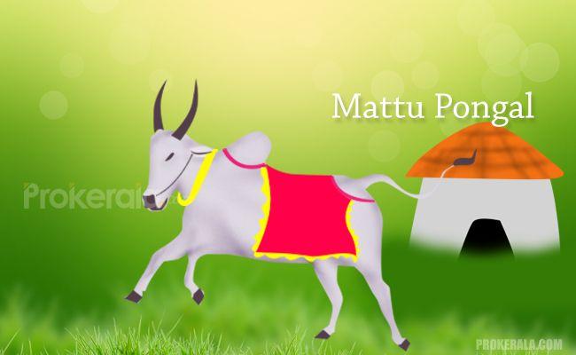 Mattu Pongal