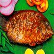 KERALA KARIMEEN FRY (PEARL SPOTTED FISH FRY)