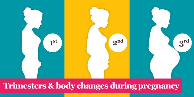 Pregnancy Stages -Trimesters & body changes during pregnancy