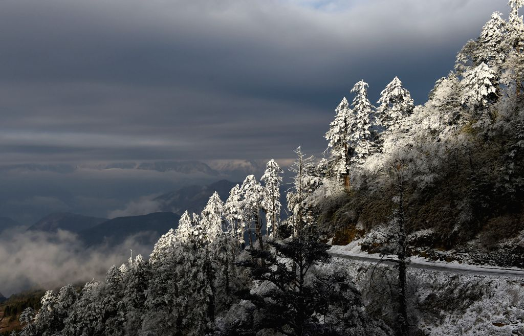Photo taken on Jan. 6, 2015 shows trees covered in ice and snow on the Wanggangping Mountain in Wajiao Village under Shimian County, southwest China ...