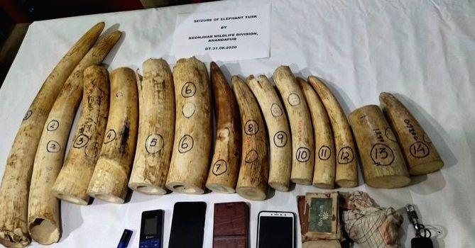 19 kg ivory seized in Odisha, 3 arrested.