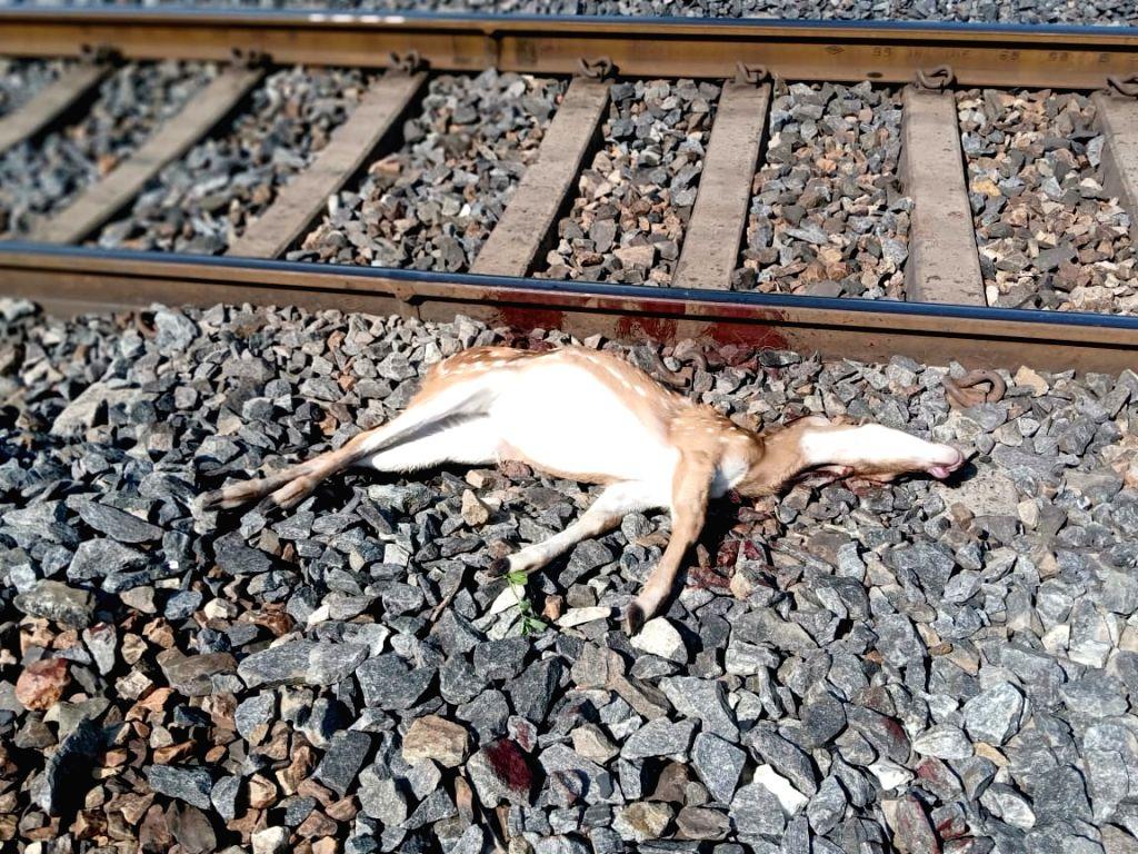 5 deer died