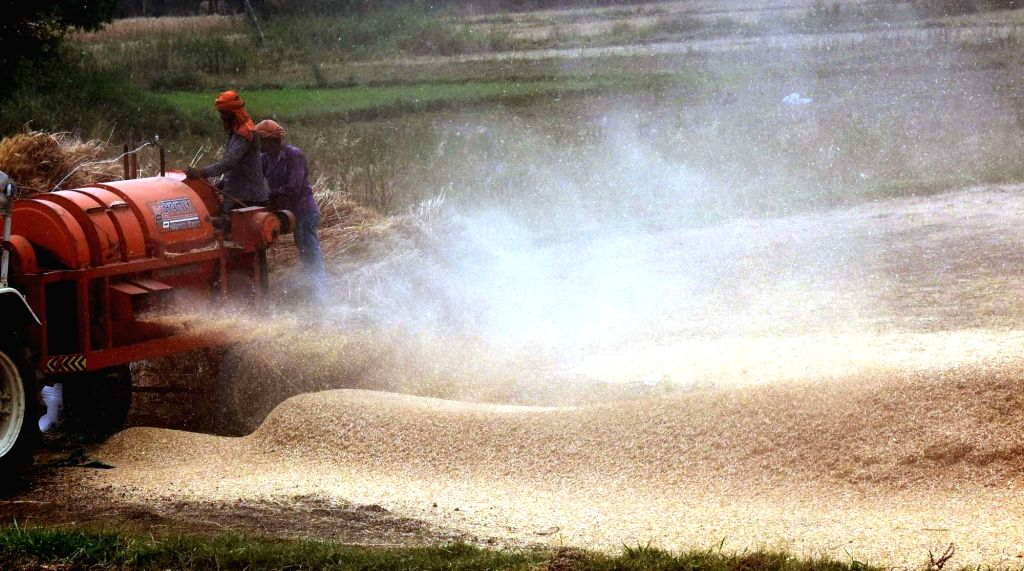 67% wheat harvested, summer crop sowing in progress: Agri Ministry