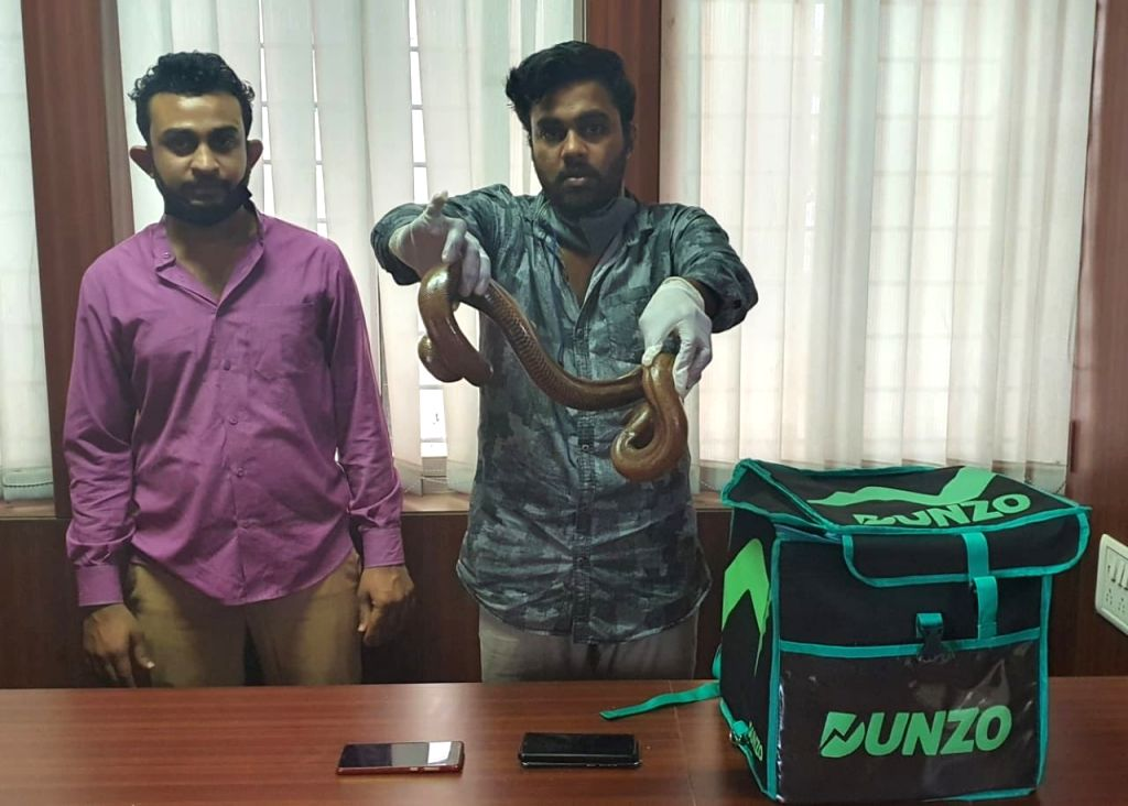 A Bengaluru city duo masquerading as Dunzo e-commerce platform delivery boys and attempting to sell two Sand Boa snakes for Rs 50 lakh were arrested on Thursday.