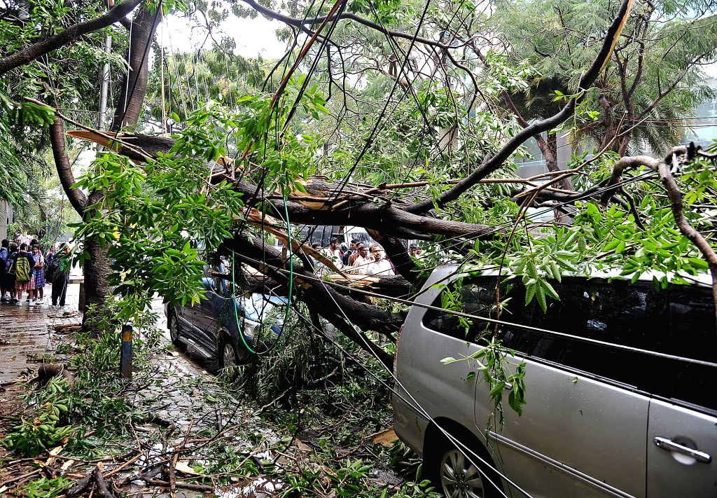 A branch of a tree that fell on the cars standing beneath it in Bengaluru on Aug 1, 2018.