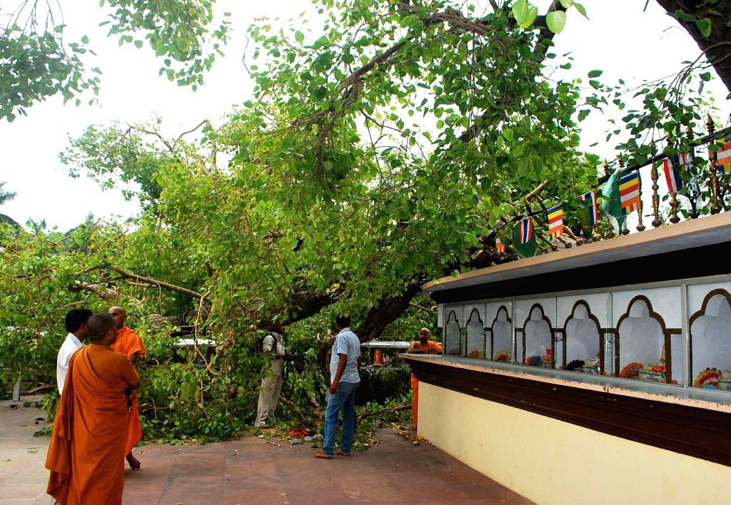 A broken branch of historic Bodhi tree under which Buddha preached his first sermon at Sarnath in Varanasi on June 20, 2014.