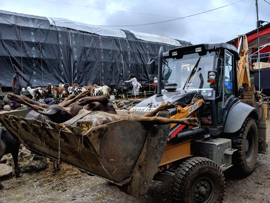 A bulldozer with dead buffaloes in Deonar Abattoir on Aug 8, 2019.