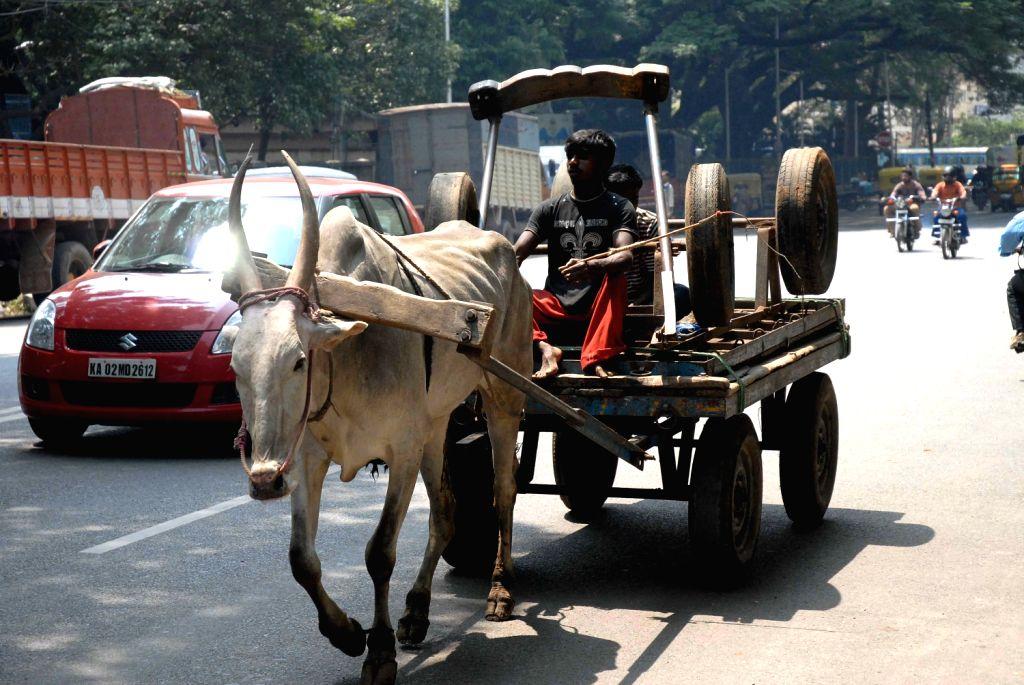 A bullock cart rider carrying spare bullock cart at Basavanagudi in Bengaluru on 2nd of February 2013.