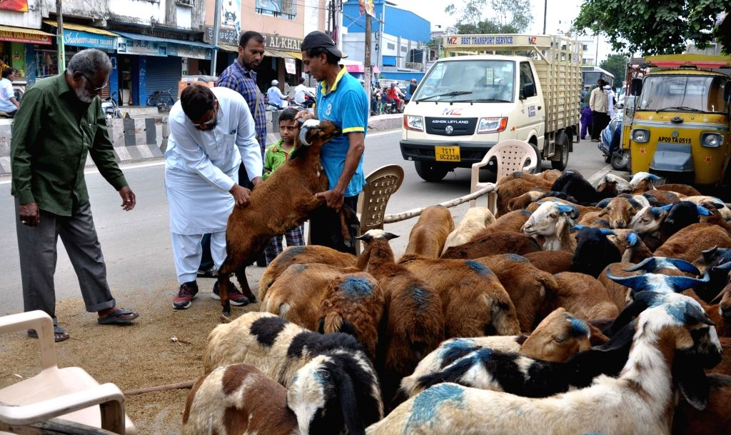 A buyer busy examining a goat at a livestock market ahead of Eid-Ul-Zuha celebrations, in Hyderabad on Aug 10, 2019.