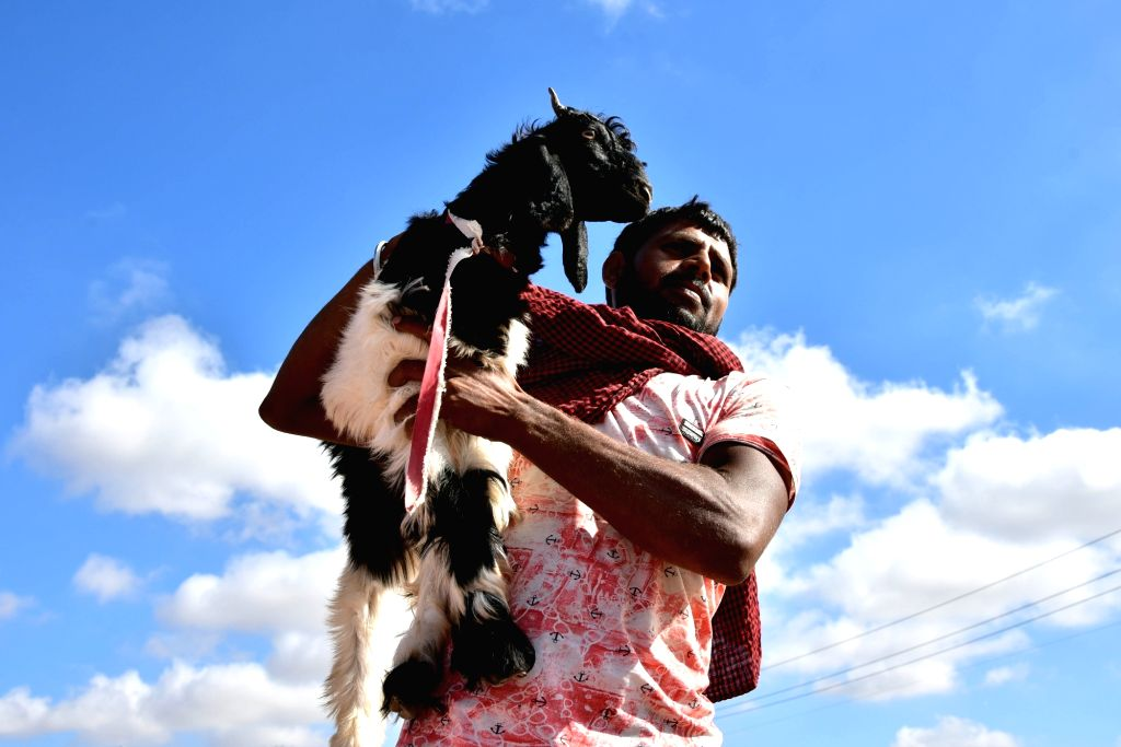 A buyer take away a sacrificial goat from a livestock market on the eve of Eid-ul-Adha, in Bikaner on Aug 11, 2019.
