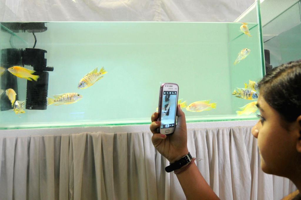 A child clicks photograph of fishes during Aqua Life 2014 exhibition at Freedom Park in Bangalore on April 18, 2014.