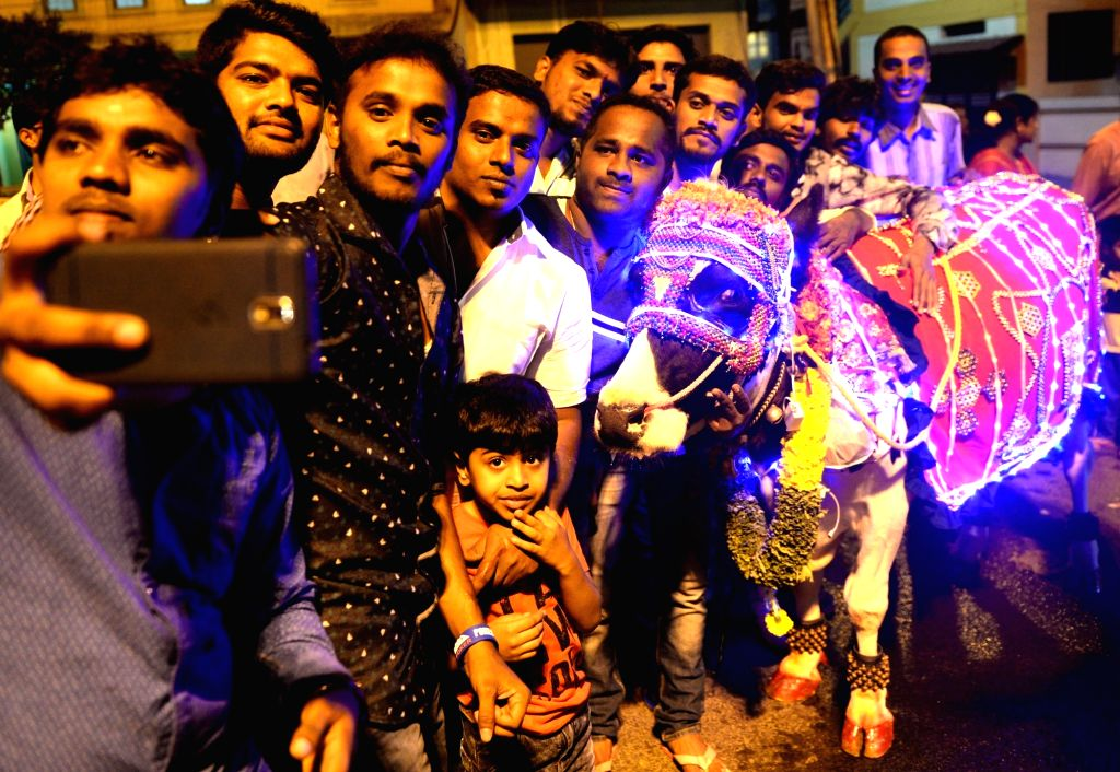 A child holds a cow with lights placed all over her on Makar Sankranti in Bengaluru on Jan 14, 2017.
