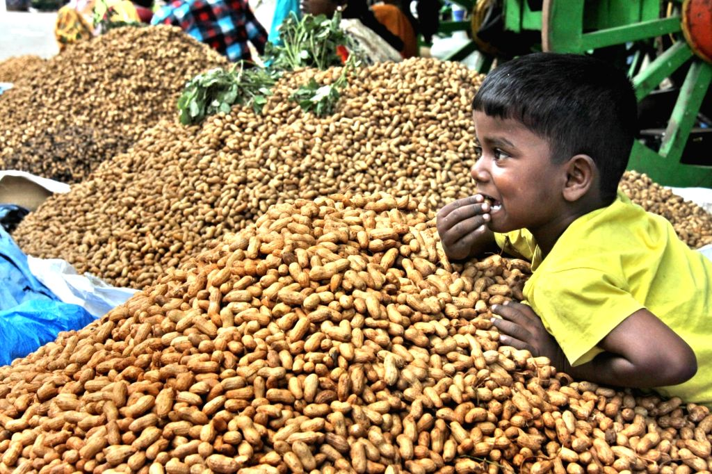 A child leans on a heap of groundnuts at 'Kadalekai Parishe' or Groundnut festival in Bengaluru on Nov 16, 2019.