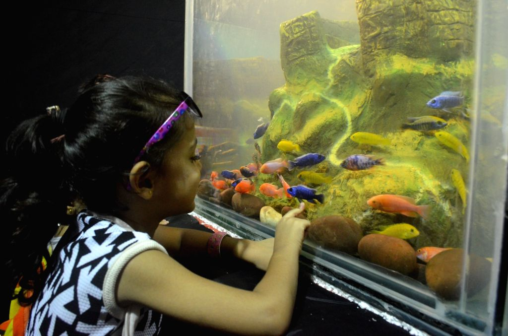 A child visits Aqua Life Exhibition where  more than 800 rare fishes are exhibited at Poddar College, Matunga in Mumbai, on Oct 8, 2016.