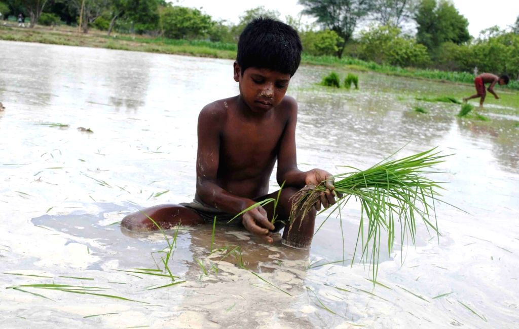 A child works in a paddy field in Allahabad on June 30, 2017.