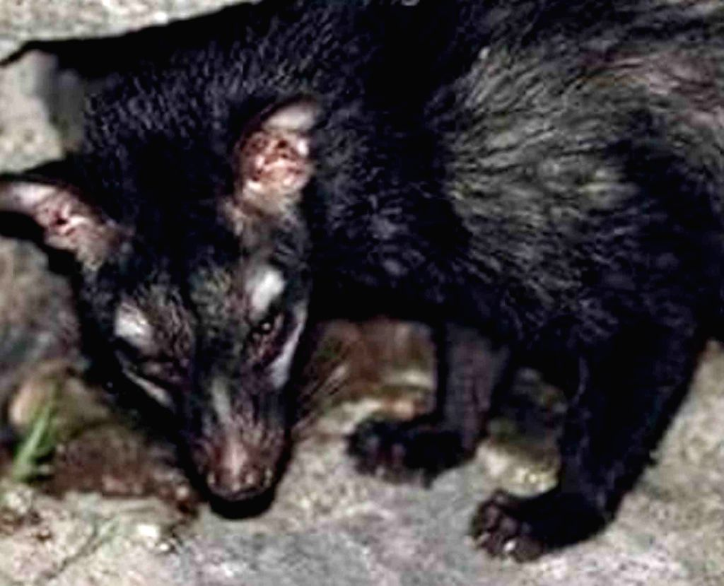 A Civet cat. (Photo: IANS)