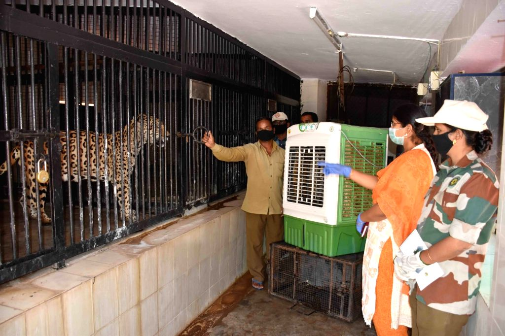 A cooler installed outside the enclosure of a Jaguar at Nehru Zoological Park to  give the animal relief from the heat, in Hyderabad on March 29, 2020.