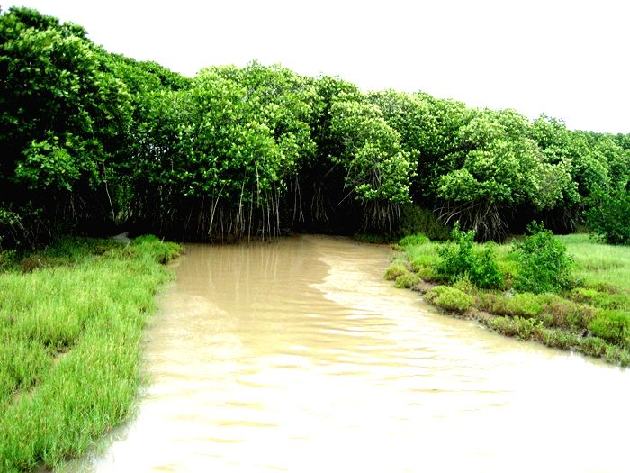 A creek in the Bhitarkanika Wildlife Sanctuary.