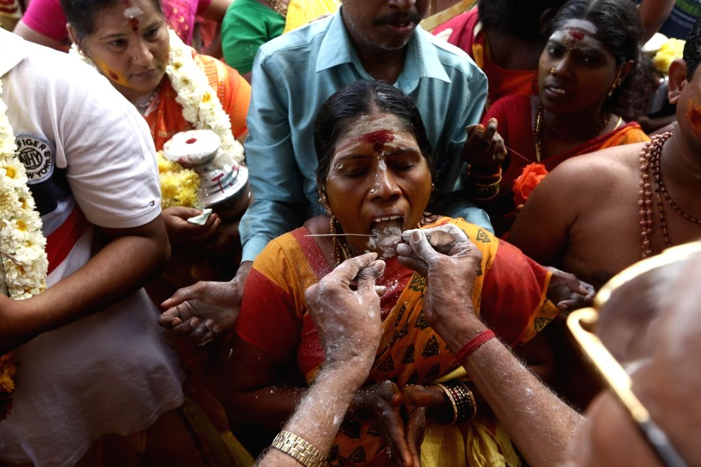 A devotee gets her tongue pierced with vel skewers before undertaking a procession towards the Murugan temple as part of rituals performed during Thaipusam celebrations, in Chennai on Feb 8, ...