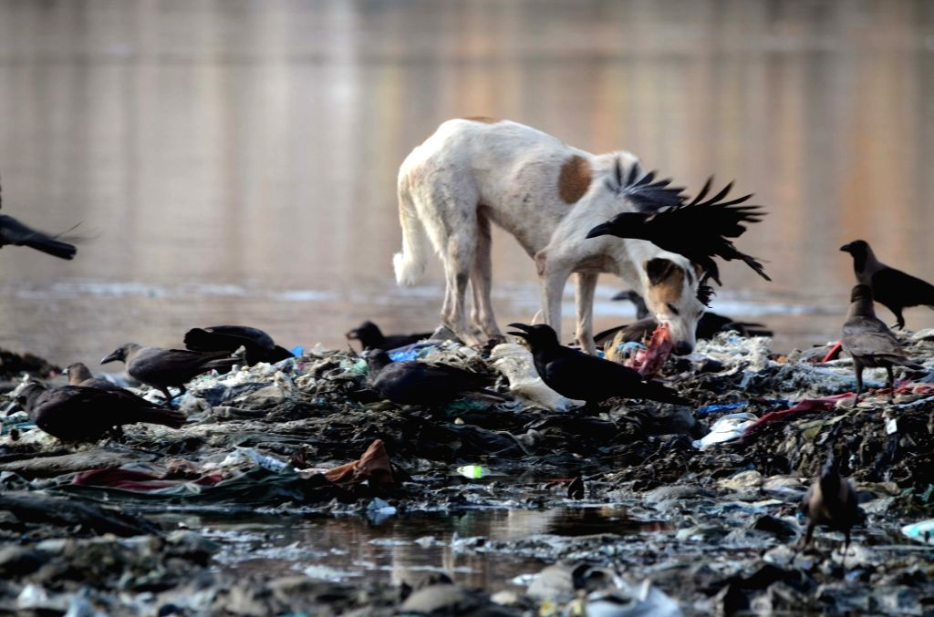 A dog enjoys its meal on the polluted shore of Mahim Beach in Mumbai, on June 3, 2019.