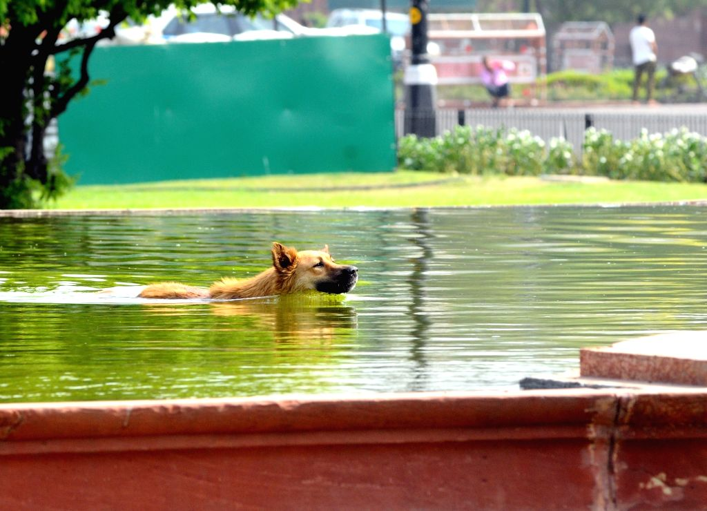 A dog seen swimming on a hot day, in New Delhi, on June 9, 2019.