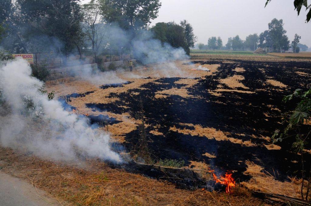 A farmer burns paddy stubble