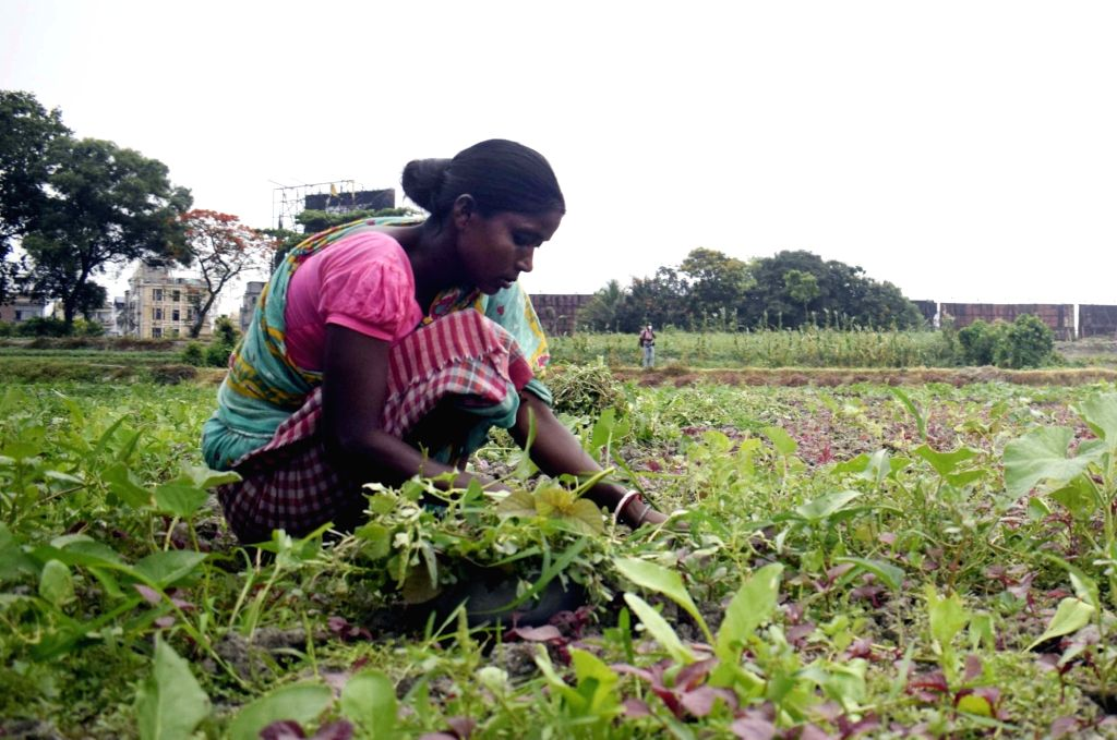 A farmer busy working at her agricultural field in Kolkata during the extended nationwide lockdown imposed to mitigate the spread of coronavirus; on Apr 26, 2020.