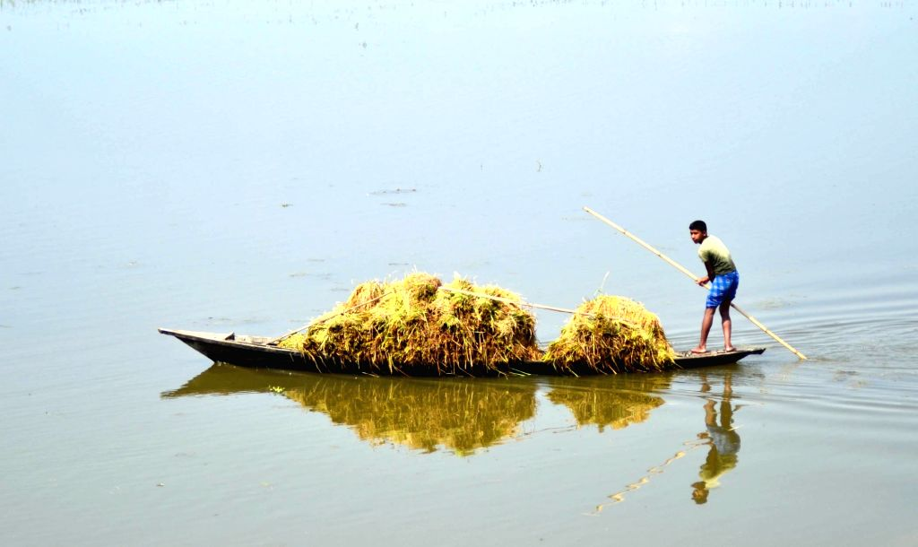 A farmer carries harvested paddy on a boat at Boko in Kamrup District of Assam on June 2, 2016.