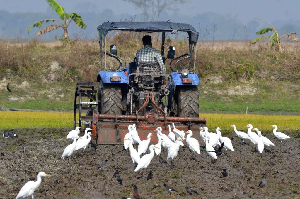 A farmer ploughs his field in Nagaon of Assam on Jan 14, 2016.