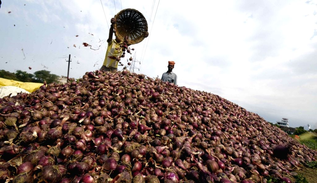 A farmer sorts onions after harvesting them at an agricultural field in Patna during the extended nationwide lockdown imposed to mitigate the spread of coronavirus; on Apr 22, 2020.