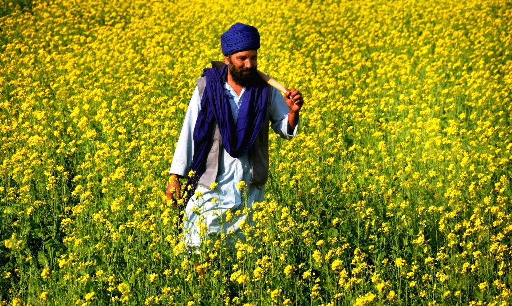 Image result for mustard fields Amritsar
