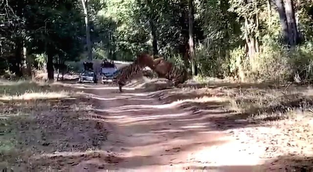 "A fierce fight between two tigers is doing the rounds on the Internet and will give you a sneak peek of the big cat's wrestling match would look like. The Indian Forest Services officer Parveen Kaswan @ParveenKaswan share the video clip and wrote, ""T"