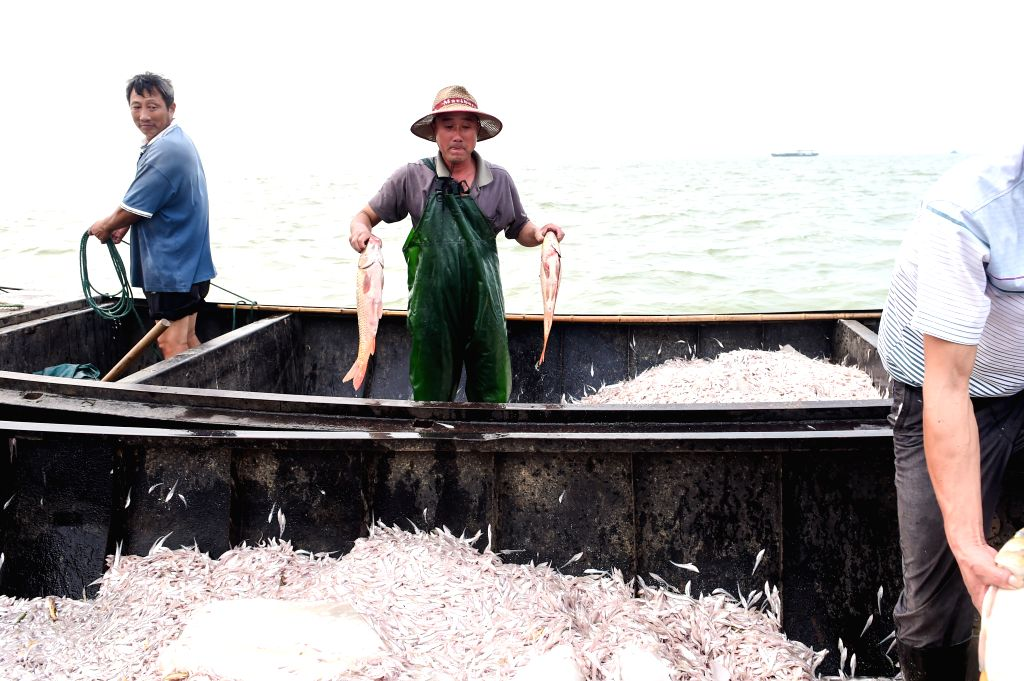 A fisherman shows newly-caught fish in his boat on Chaohu Lake, east China's Anhui Province, Aug. 15, 2015. Nearly 2,000 fishing boats set sail for fishing in the ...