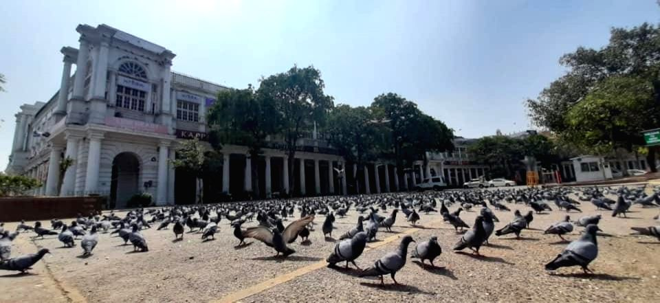 A flock of pigeons at Delhi's Connaught Place during nationwide shutdown - Janata Curfew - imposed as a precautionary measure to contain the spread of COVID-19.