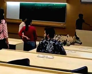 A full-grown stray cow strolled inside a lecture hall at IIT-B, last week, apparently to shelter from the heavy rain. IIT Bombay officials have said they are making inquiries before issuing a ...