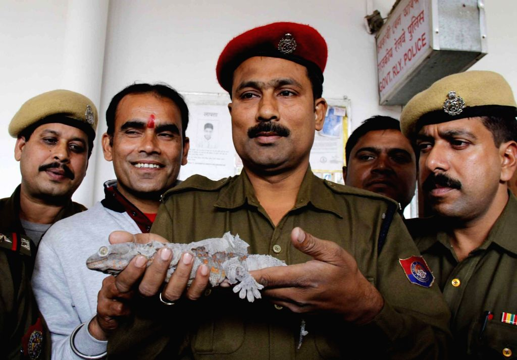 A Government Railway Policeman holds a Gecko lizard which was seized from a 53 year old lady Lein Kim Simte travelling in Rajdhani Express on Dec.10, 2013.