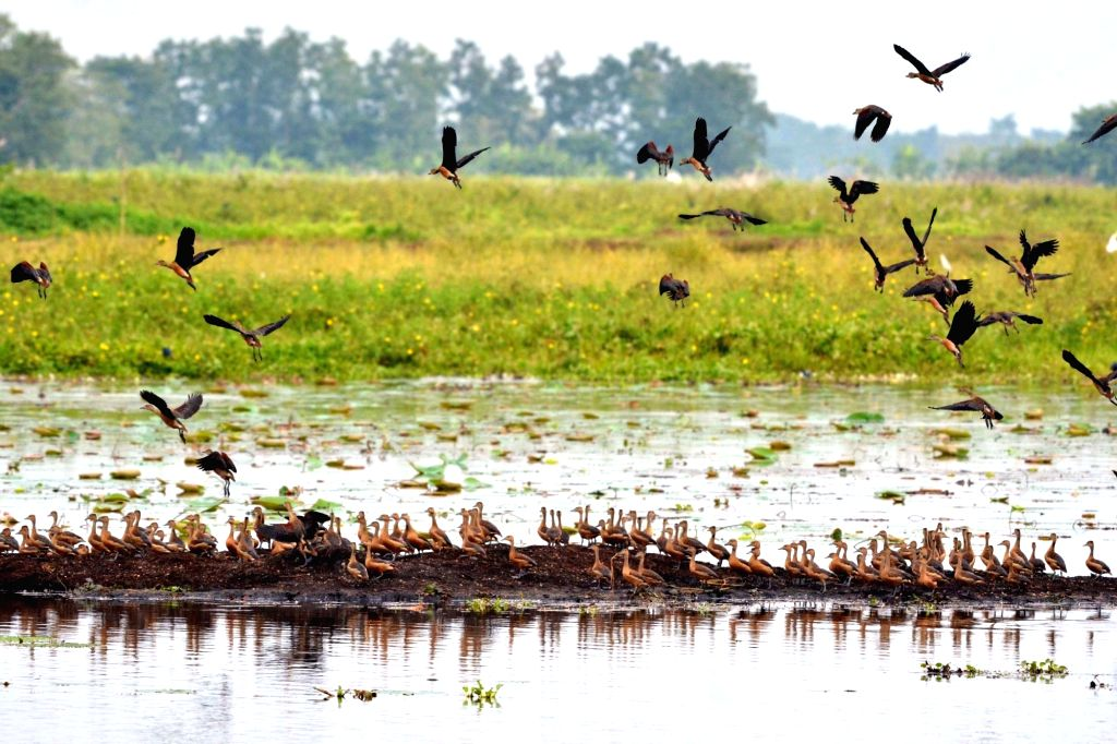 A group of Lesser Whistling Ducks fly across the Hahila Beal at Nonoi sky in Nagaon, on Nov 15, 2015.