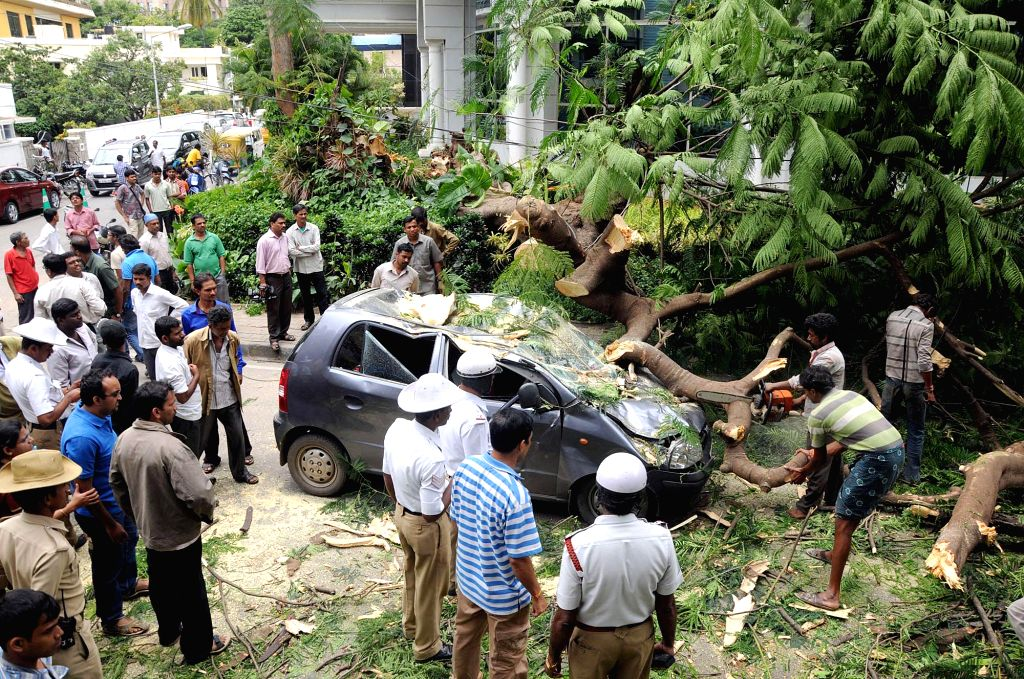 A huge tree fell on a car due to heavy wind in Bangalore on Aug. 16, 2014. (Photo : IANS)