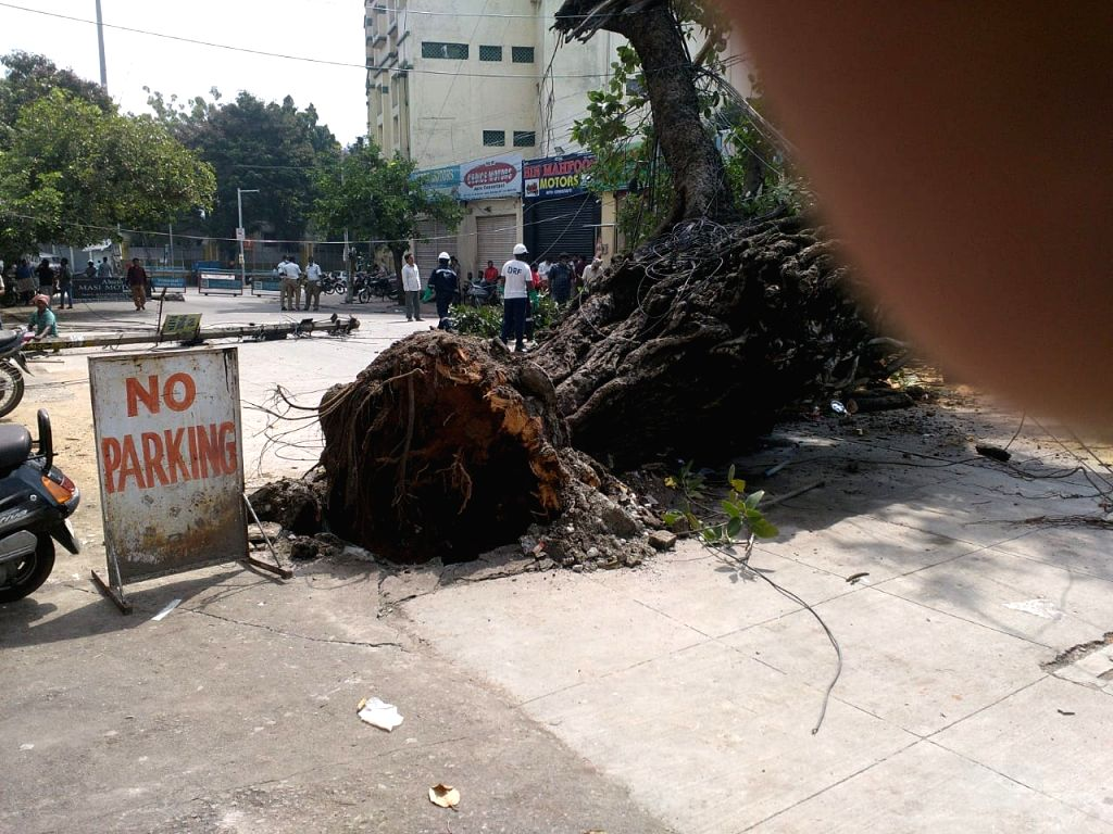 A hundred year old Banyan tree uprooted due to heavy rain at King Kothi in Hyderabad on October 18,2020.