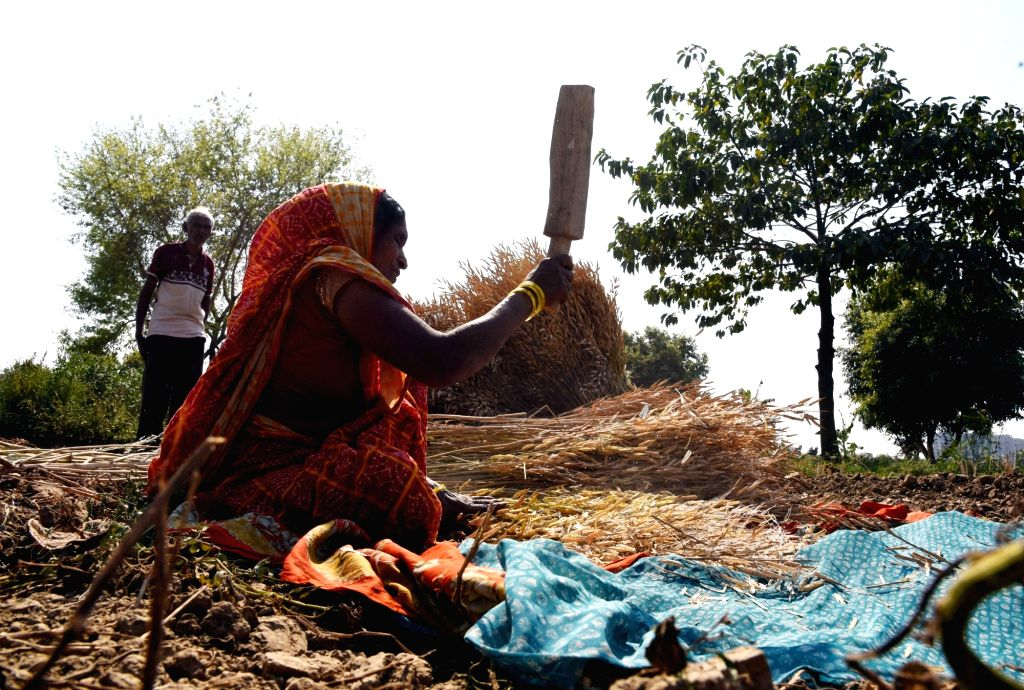 A lady busy working in a field near Patna on March 7, 2019.