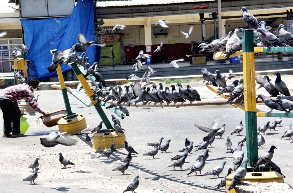 A man feeds a flock of pigeons on Day 5 of the 21-day countrywide lockdown imposed to contain the spread of novel coronavirus, in Bengaluru on March 29, 2020.