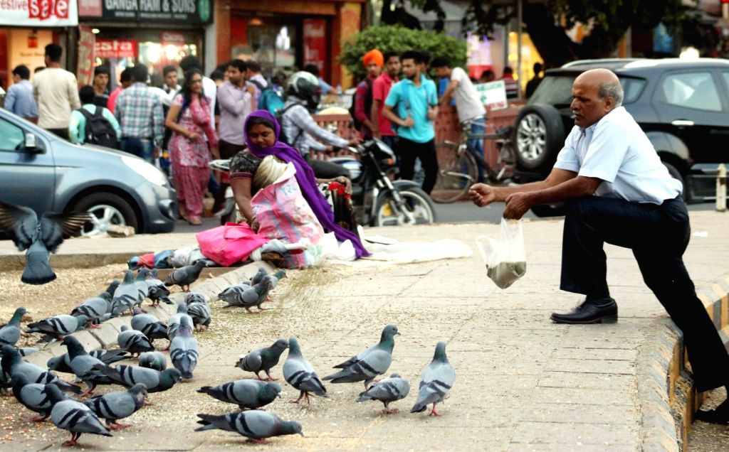 A man feeds pigeons at Connaught Place in New Delhi on Oct 20, 2016.
