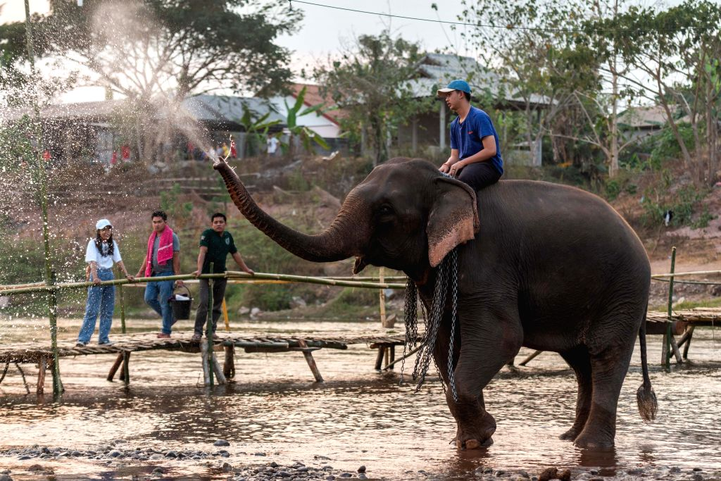 A man rides on an elephant during the Elephant Festival in a tributary of Mekong River in northern Lao province of Xayaboury, on Feb. 22, 2020. The annual ...