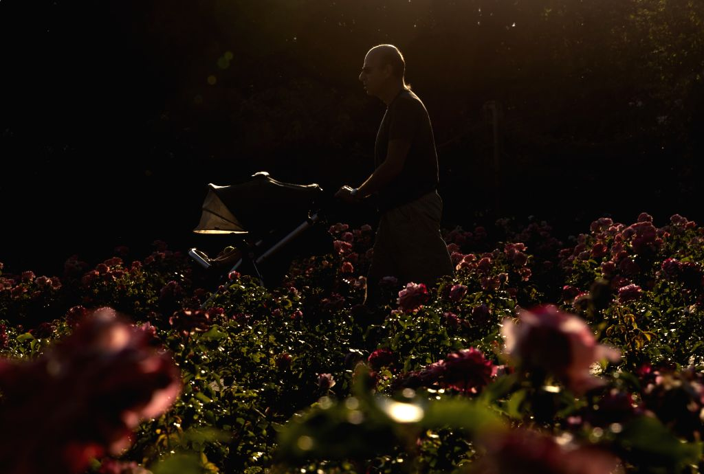 A man walks in Queen Mary's Rose Gardens at Regent's Park in central London, Britain, on June 25, 2020. Britain on Thursday experienced its hottest day of the year ...