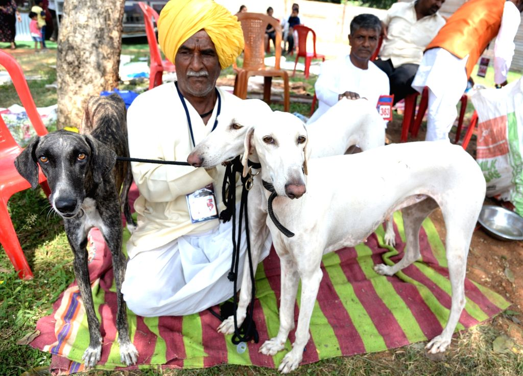 A man with his pets during All India championship dog show organised by Silicon City Kennel Club, in Bengaluru on Nov 10, 2019.