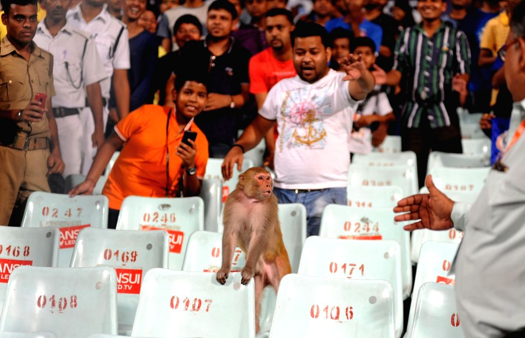 A monkey watches an IPL match between Kolkata Knight Riders and Mumbai Indians at the Eden Gardens in Kolkata, on April 13, 2016.