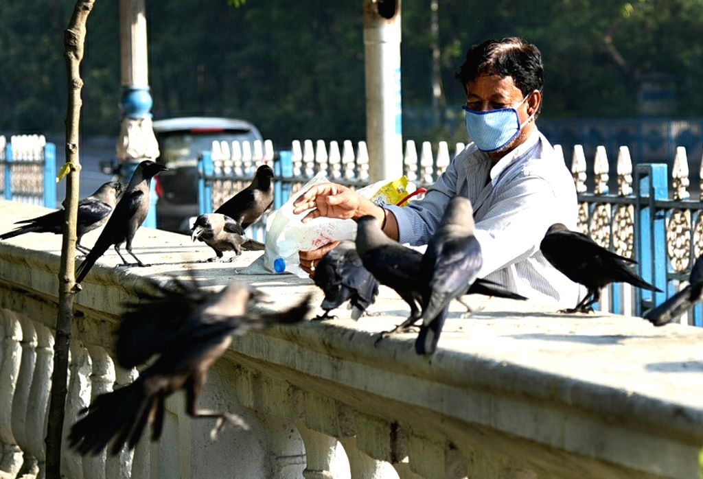 A person feeds crows at Maidan during the extended nationwide lockdown imposed to mitigate the spread of coronavirus, in Kolkata on May 9, 2020.