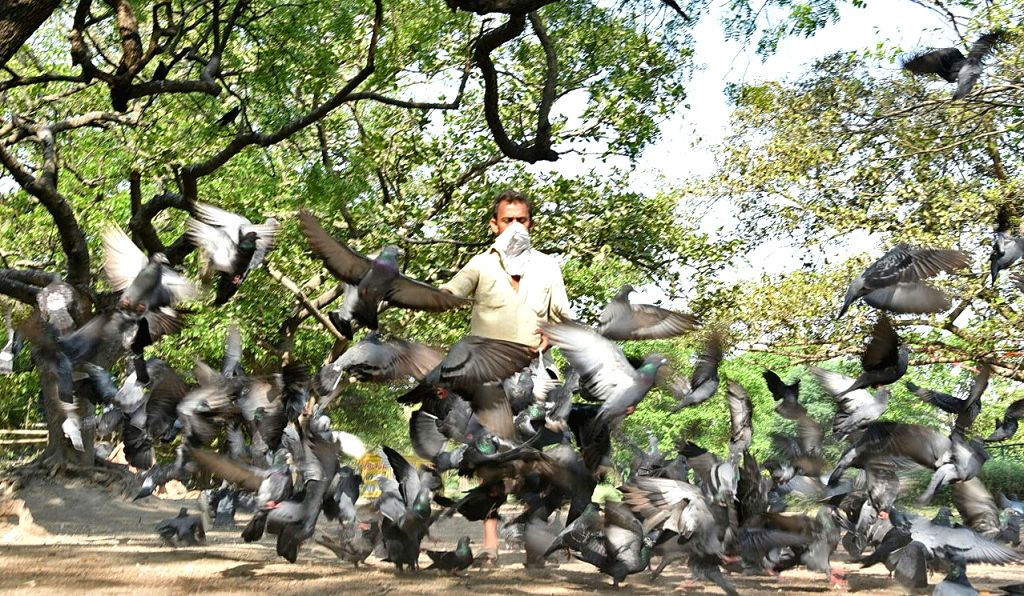 A person feeds pigeons at Maidan during the extended nationwide lockdown imposed to mitigate the spread of coronavirus, in Kolkata on May 9, 2020.