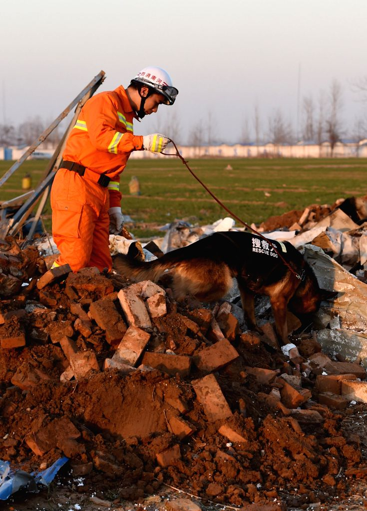 A rescuer and a sniffer dog search for survivors at a explosion site in Tongxu County of Kaifeng City, central China's Henan Province, Jan. 14, 2016. The number ...