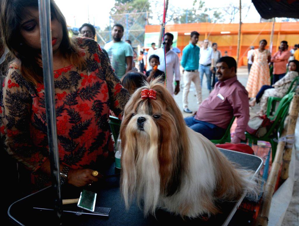A Shih Tzu seen during a dog show, in Kolkata, on Feb 24, 2019.
